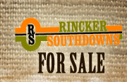 For Sale - Rincker Southdowns